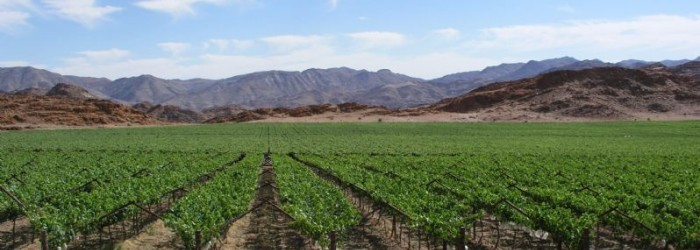 Asian market managers with leading South African export companies have hailed the country's new table grape protocol with China